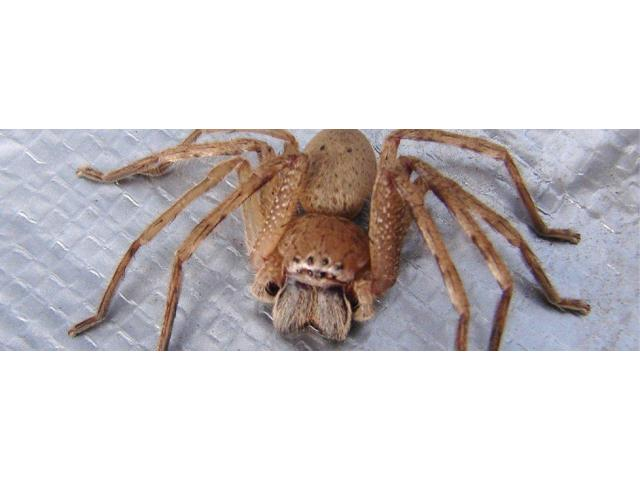 R.I.P. Pest Management