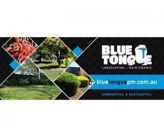 Blue Tongue Property Maintenance