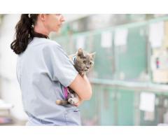 Brisbane Veterinary Emergency & Critical Care Service (BVECCS)