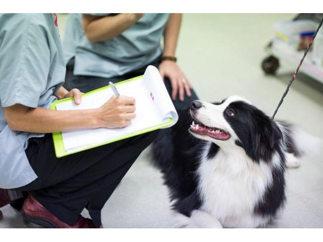 Brisbane Veterinary Emergency & Critical Care Service (BVECCS)