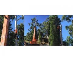 Henshaws Tree Service